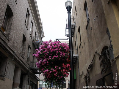 Beautiful flowers hanging in one of the alleyways heading into Chinatown