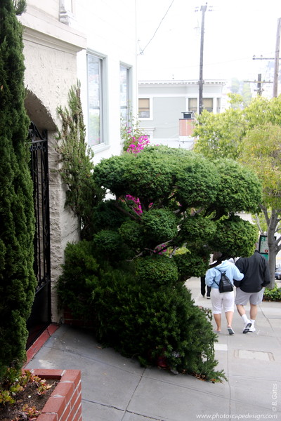 Beautiful topiary on one of the streets in San Francisco