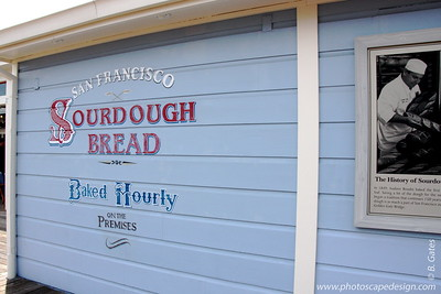 """Pier 39  Sourdough is the oldest and most original form of leavened bread. The oldest recorded use of sourdough is from the Ancient Egyptian civilizations around 1500 BC.  Sourdough was the main bread made in Northern California during the California Gold Rush, and it remains a part of the culture of San Francisco today. The bread became so common that """"sourdough"""" became a general nickname for the gold prospectors. The nickname remains in """"Sourdough Sam,"""" the mascot of the San Francisco 49ers.  San Francisco sourdough is the most famous sourdough bread made in the U.S. today. In contrast to sourdough production in other areas of the country, the San Francisco variety has remained in continuous production for nearly 150 years."""