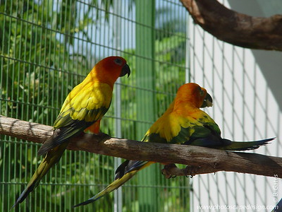 Parrot Jungle - Miami, Florida