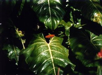Butterfly World - Coconut Creek, Florida (1999-2000)