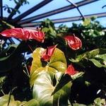 Butterfly World - Coconut Creek, Florida (1999-2000)