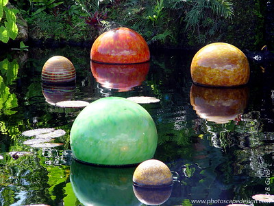 Chihuly at Fairchild - Fairchild Tropical Botanic Garden - Coral Gables - Niijima Floats in the Benjamin Rush Sibley Victoria Amazonica Pool (April 14, 2006)