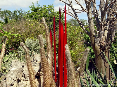 Chihuly at Fairchild - Fairchild Tropical Botanic Garden - Coral Gables - Red Reeds in the Arid Garden (April 14, 2006)
