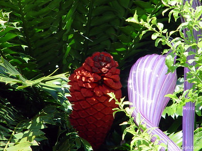Chihuly at Fairchild - Fairchild Tropical Botanic Garden - Coral Gables - Lavender Herons in the Cycad Circle (the red is the center of a cycad) (April 14, 2006)