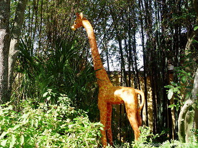 Disney World - Animal Kingdom (April 11, 2006)