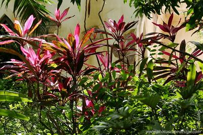 Miami MetroZoo (June 1, 2008)  Wings of Asia Aviary