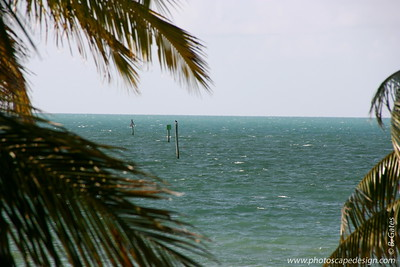 View from the balcony of the room I was in at the Dewey House - Key West (June 5, 2008)