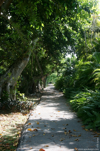 Old Cutler Road - Coral Gables (June 2, 2008)