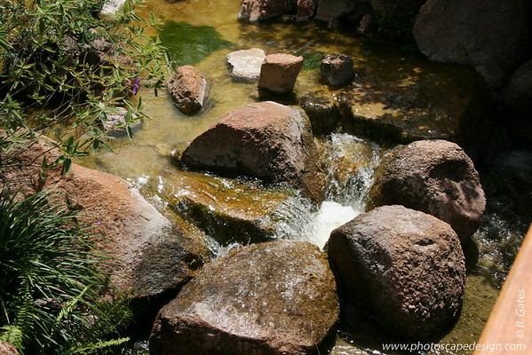 The Morikami Japanese Gardens - Delray Beach (May 31, 2008)