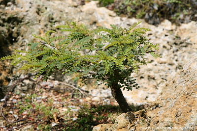 The Morikami Japanese Gardens - Delray Beach (May 31, 2008) [D]