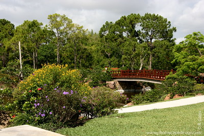 The Morikami Japanese Gardens - Delray Beach (May 31, 2008)  This bridge symbolizes the link between Japan and Florida provided by The Morikami.