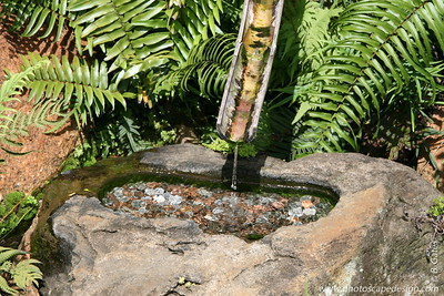 The Morikami Japanese Gardens - Delray Beach (May 31, 2008) [D]  Tsukubai  A water basin originally placed in tea gardens to enable guests to symbolically cleanse and purify themselves.  Today tsukubai serve as focal points in many gardens; water is channeled through a bamboo pipe into the basin as if diverted from a clear mountain stream.
