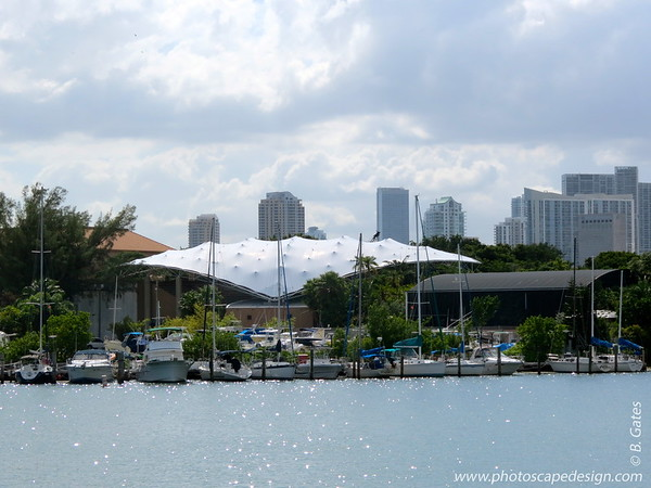 """Jungle Island [foreground] - Miami Skyline [background]   Jungle Island began its history in 1936 as Parrot Jungle. Created by Franz Scherr with the idea of an attraction where birds could """"fly free,"""" Parrot Jungle was originally located in south Miami and was known primarily its wide array of exotic birds including Pinky, the high-wire bicycle riding cockatoo, and our world-famous pink flamingos who have been prominently featured in the opening credits of television's Miami Vice.  The park has evolved over the years under the direction of its current owners who purchased the park in 1988. After Hurricane Andrew, the owners set their sights on continuing to develop the park on Watson Island. After construction was completed in 2003, the Watson Island location opened for business as Parrot Jungle Island.  The evolution of the Jungle has led to the renaming of the park as Jungle Island to better encompass the wide variety of animals, plants and activities available."""