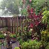 Nice rain shower!
