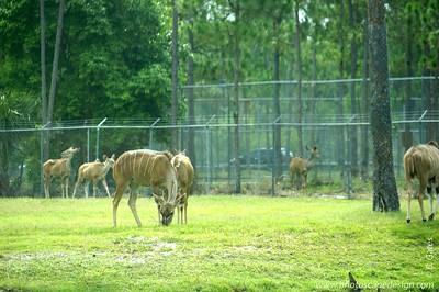 Lion Country Safari