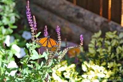 Butterflies in Bloom 2011 at Zoo Boise - Boise, Idaho