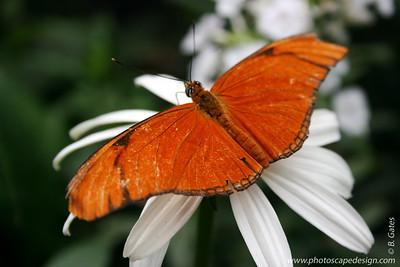 Butterflies in Bloom 2007 at Zoo Boise - Boise, Idaho