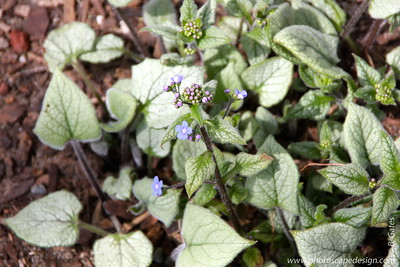 Idaho Botanical Garden [D]