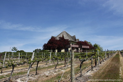 Ste. Chapelle Winery & Vineyards