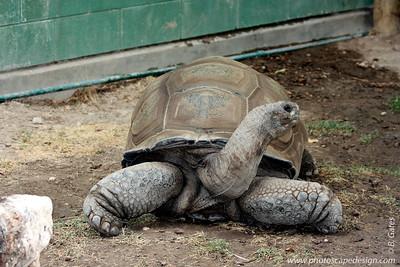 Turtle - Zoo Boise