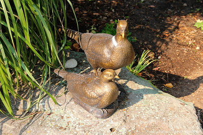 Ring-necked Pheasant Pair - This bronze sculpture was created by Douglas Rose in 2010.  The piece was commissioned by Wilma Gnemi to honor her parents, Bill and Margaret. Ms. Gnemi's father worked for Idaho Fish and Game for 35 years and her parents raised thousands of pheasants on a Jerome game farm for release into the wild.  They also experimented with plants, developing an extensive collection of irises and other plants that were donated to the Garden at the end of their lives.  Wilma and her parents appreciated the beauty and peacefulness created at the garden.   The sculpture was cast at the Metal Arts Foundry in Lehi, Utah from carved basswood models which took a year to prepare. The Ring-necked Pheasant Pair is located at the Cottage Plaza.