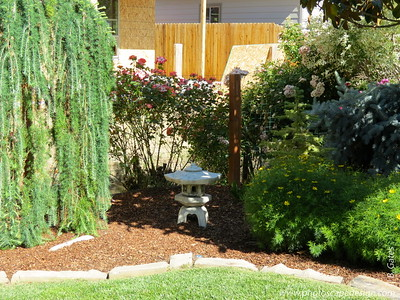 This property was formerly known as Sunset Nursery.  Now, it's a beautiful private home and cottage garden where you find your way along winding paths and an amazing collection of more than 100 different conifers.
