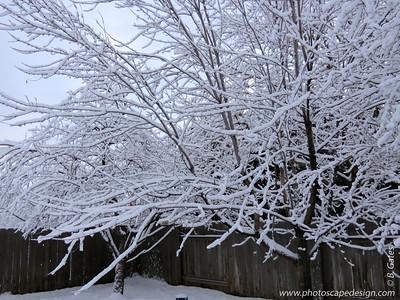 Snowy morning - January 29, 2013