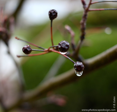 12.05.12:  Reflection in water drops.