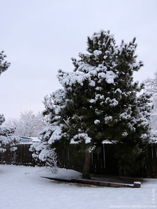 Snowy morning - January 29, 2013