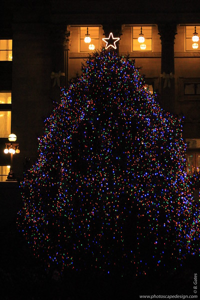 Capitol Christmas Tree - December 21, 2012