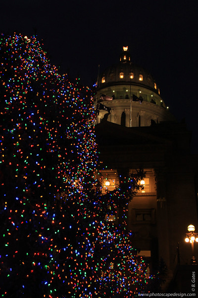 Capitol Christmas Tree - December 21, 2012