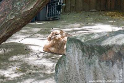 Zoo Boise