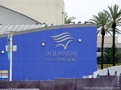 Aquarium of the Pacific - Long Beach, California