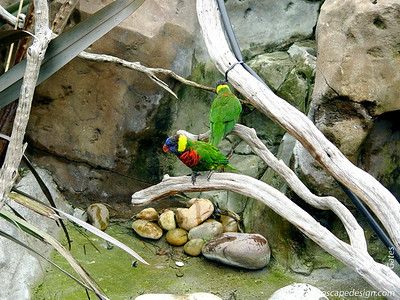 Lorikeets - Aquarium of the Pacific - Long Beach, California
