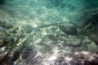 Sail 'n Fiesta Snorkel - Cabo San Lucas, Mexico
