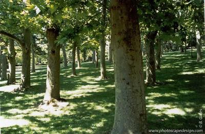 Lithia Park - Ashland, Oregon  (2003)