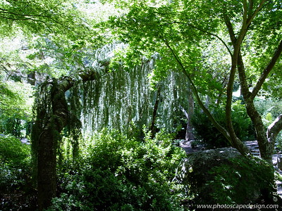 Lithia Park - Ashland, Oregon (2005)