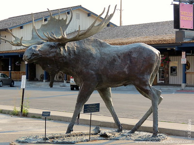 Colossus, moose sculpture by Terry Lee
