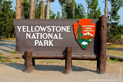 The  human history of the Yellowstone region goes back more than 11,000 years. From then until to the very recent past, many groups of Native Americans used the park as their homes, hunting grounds, and transportation routes. These traditional uses of Yellowstone lands continued until a little over 200 years ago. In 1872, a country that had not yet seen its first centennial, established Yellowstone as the first national park in the world. Hundreds of species of mammals, birds, fish and reptiles have been documented, including several that are either endangered or threatened. The vast forests and grasslands also include unique species of plants. Yellowstone National Park is the largest and most famous megafauna location in the Continental United States. Grizzly bears, wolves, and free-ranging herds of bison and elk live in the park. The Yellowstone National Park bison herd is the oldest and largest public bison herd in the United States.