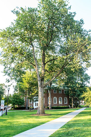 Designed Cultural Landscape, Dartmouth College, NH