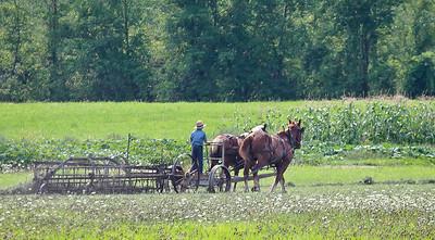 Amish Farm, Upstate NY.