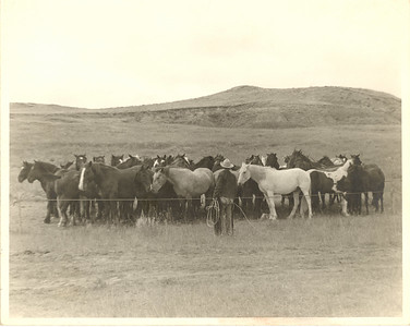 McNierney Remuda   --------------------  Chuckwagons and cowboy-filled bunkhouses were already scarce on the Northern Great Plains when my maternal grandmother, Edna Lucille (WILDMAN) Campbell, took the following set of roundup photos (circa 1948). The neighboring McNierney Livestock, one of the largest ranches in Montana, sent a wagon out with the cowboys on the roundup that year. It was a big deal, and Grandma went out to visit and take pictures. Although we don't know the exact location where they were taken, it is safe to say it was within Custer County, Montana.  McNierney Livestock was a sizeable spread and a ranch of some renown. The Three D, as it was called, had a ranch manager, another fella who oversaw the cowboys, the cowboys and a cook. One cook who I spoke with said she had five or six cowboys to feed, including her husband. They'd hire extra help as the season demanded. Evidently my uncle, Kenneth Campbell, was working this particular roundup. My mom says the paint in the rope corral belonged to him. He would have been around 13 at the time. (You can see the chuckwagon team to the far left. Something out of range of the camera has their attention.)