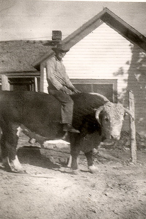 """If it Had Four Feet: circa 1930  Bill astraddle a horned Hereford bull out front of the family home at Coalwood, Montana  Times were hard, but Granddad found fun where he could. """"We tried to sell out but couldn't find a buyer,"""" he explained. """"Then, the farm program came along, our crops got better, and cattle prices went up. We bought some tax deed lands from the county, everything seemed to get better. We were able to eat something besides beans.  """"For several years, we were paying bills with the money we took in, then when March came along, we would have to borrow to pay income tax. Some of this time, I worked all day and some of the night. We got things straightened up. At one time I owed five years' taxes."""""""