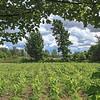 Heritage Rural Landscape, UCV