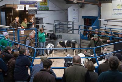Leyburn Friday Cattle Auction, Decemebr 201