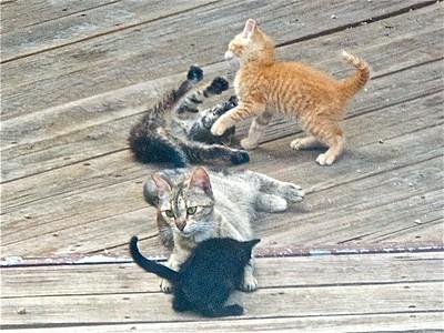 ^060614-16 Herkemina & Kittens