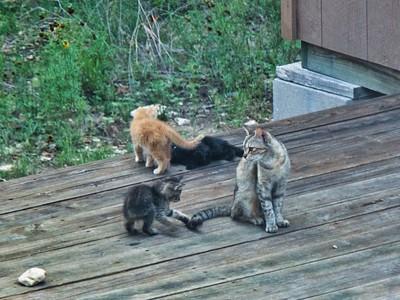 ^060614-06 Herkemina & her kittens