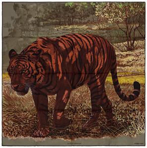 Tigre du Bengale - Kaki Fauve Chocolat - NWSTS - 1703011828