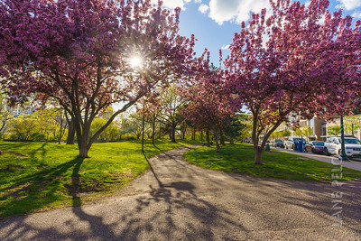 Father Hennepin Park - Spring 4